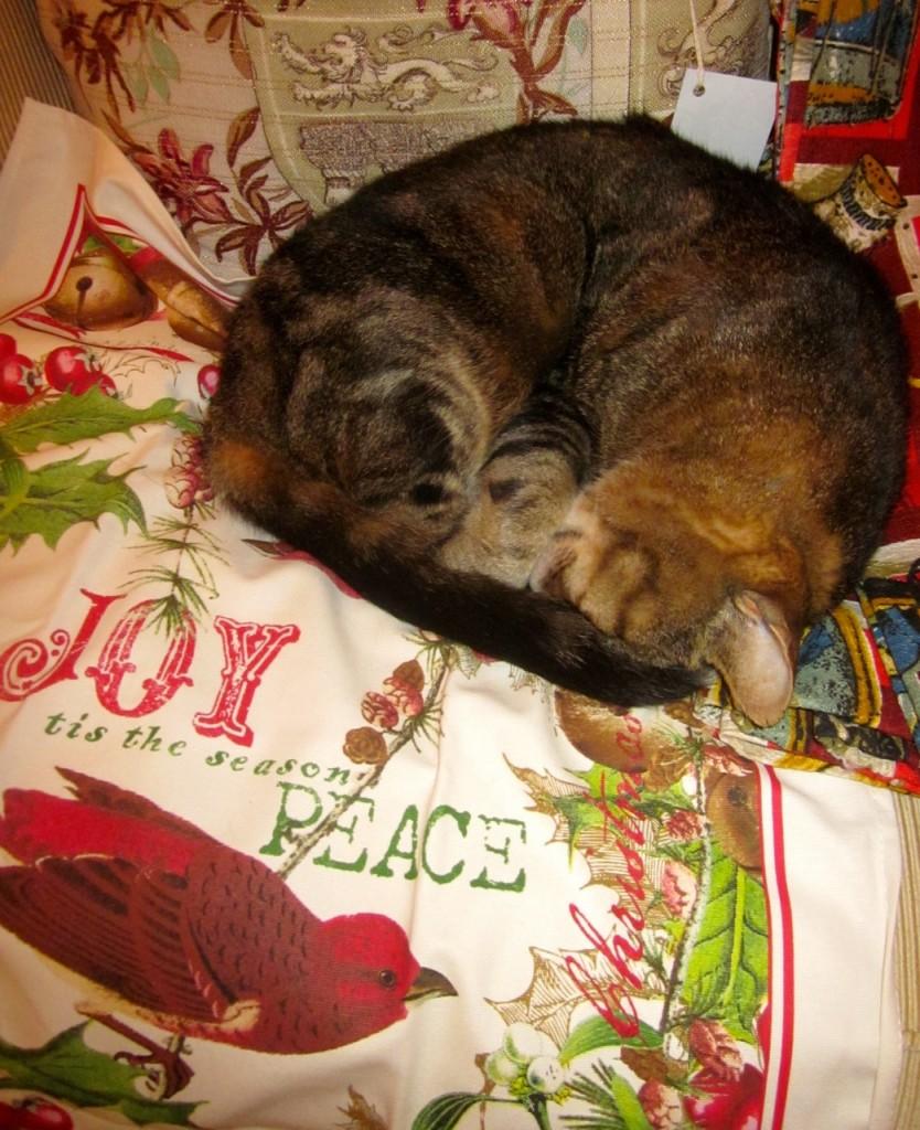 Pre-Christmas cat nap!